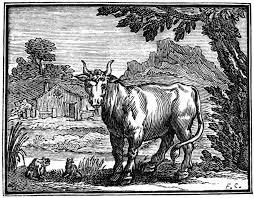 Grenouille et le boeuf